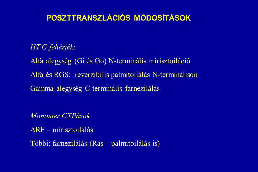 POSZTTRANSZLÁCIÓS MÓDOSÍTÁSOK HT G fehérjék: Alfa alegység (Gi és Go) N-terminális mirisztoiláció Alfa és RGS: reverzibilis palmitoilálás N-terminálison Gamma alegység C-terminális farnezilálás Monomer GTPázok ARF – mirisztoilálás Többi: farnezilálás (Ras – palmitoilálás is)