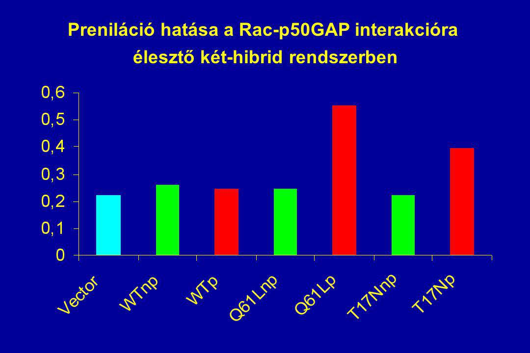 Preniláció hatása a Rac-p50GAP interakcióra élesztő két-hibrid rendszerben