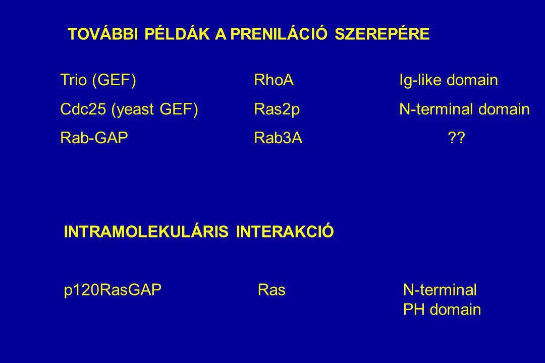 TOVÁBBI PÉLDÁK A PRENILÁCIÓ SZEREPÉRE Trio (GEF)RhoAIg-like domain Cdc25 (yeast GEF)Ras2pN-terminal domain Rab-GAPRab3A?.