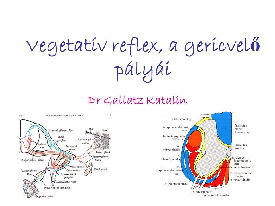 Vegetatív reflex, a gericvel ő pályái Dr Gallatz Katalin