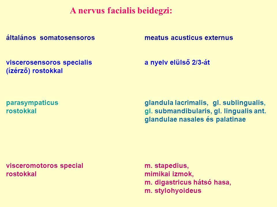A nervus facialis beidegzi: általános somatosensorosmeatus acusticus externus viscerosensoros specialis a nyelv elülső 2/3-át (ízérző) rostokkal visce