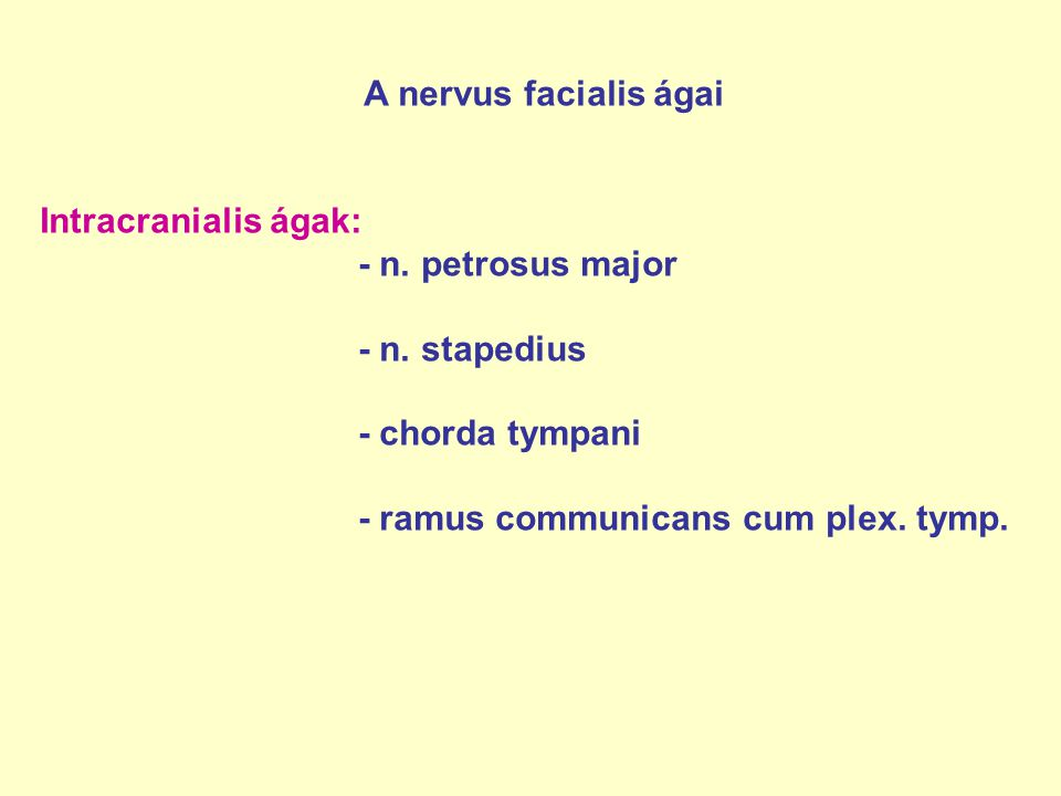 A nervus facialis ágai Intracranialis ágak: - n. petrosus major - n. stapedius - chorda tympani - ramus communicans cum plex. tymp.