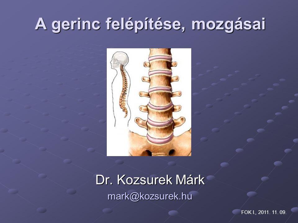 A gerinc felépítése, mozgásai Dr. Kozsurek Márk mark@kozsurek.hu FOK I., 2011. 11. 09.