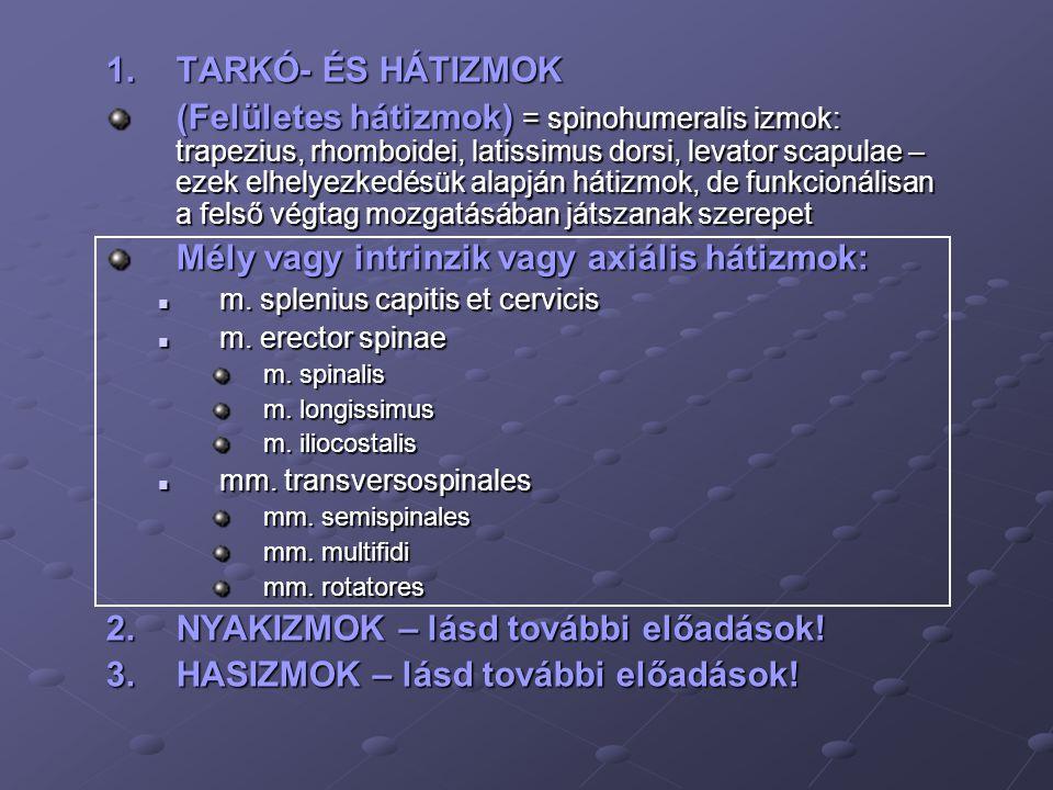 1.TARKÓ- ÉS HÁTIZMOK (Felületes hátizmok) = spinohumeralis izmok: trapezius, rhomboidei, latissimus dorsi, levator scapulae – ezek elhelyezkedésük ala