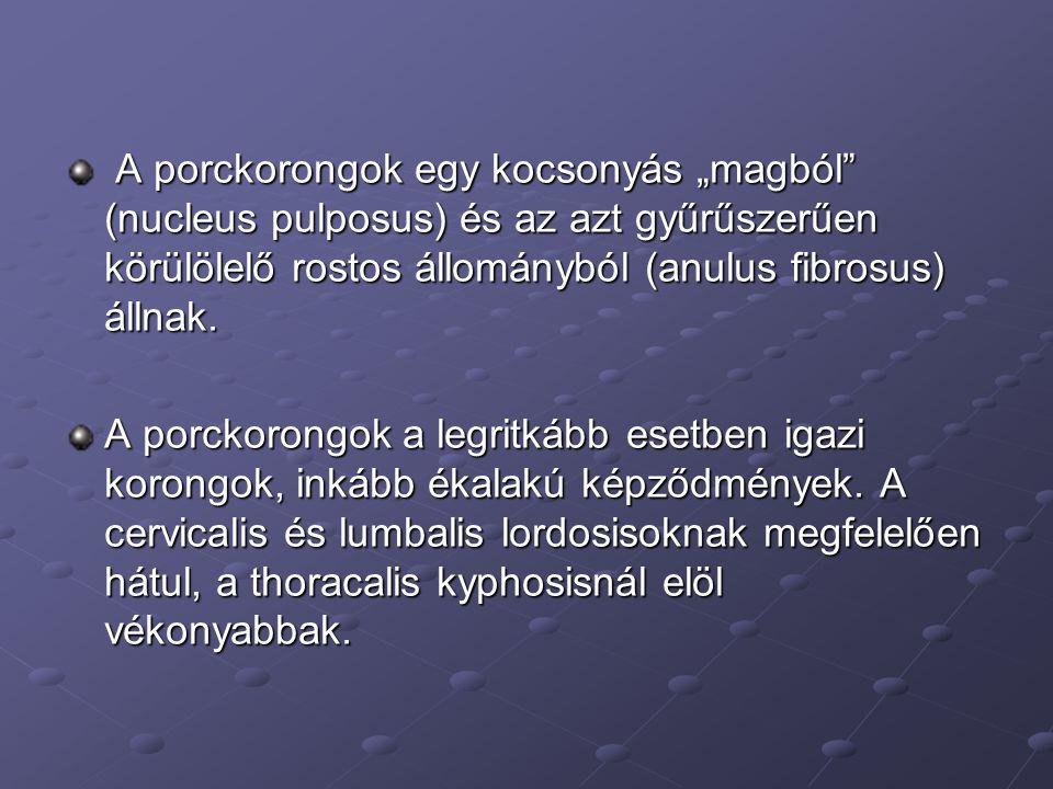 """A porckorongok egy kocsonyás """"magból"""" (nucleus pulposus) és az azt gyűrűszerűen körülölelő rostos állományból (anulus fibrosus) állnak. A porckorongok"""