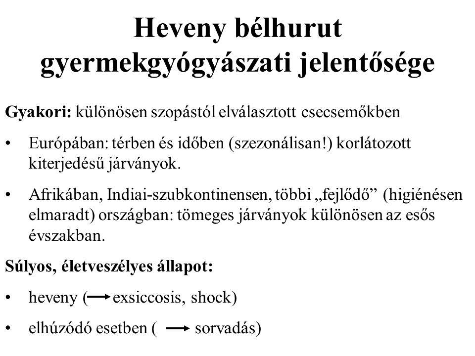Heveny bélhurut gyermekgyógyászati jelentősége Gyakori: különösen szopástól elválasztott csecsemőkben Európában: térben és időben (szezonálisan!) korlátozott kiterjedésű járványok.