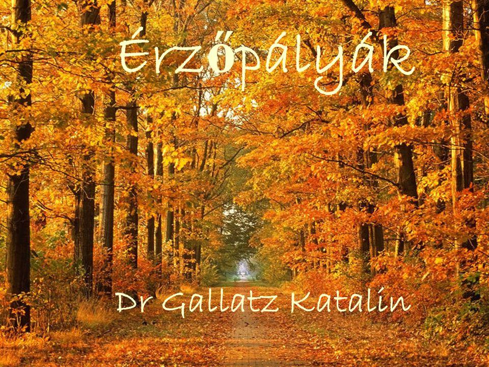 Érz ő pályák Dr Gallatz Katalin