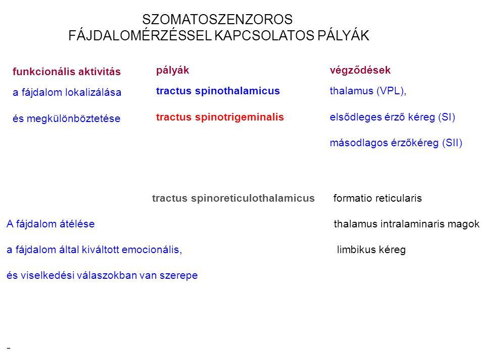 SZOMATOSZENZOROS FÁJDALOMÉRZÉSSEL KAPCSOLATOS PÁLYÁK pályák tractus spinothalamicus tractus spinotrigeminalis végződések thalamus (VPL), elsődleges ér