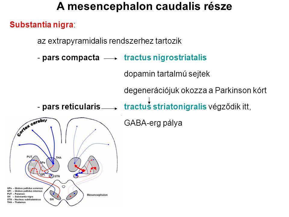 Substantia nigra: az extrapyramidalis rendszerhez tartozik - pars compactatractus nigrostriatalis dopamin tartalmú sejtek degenerációjuk okozza a Park