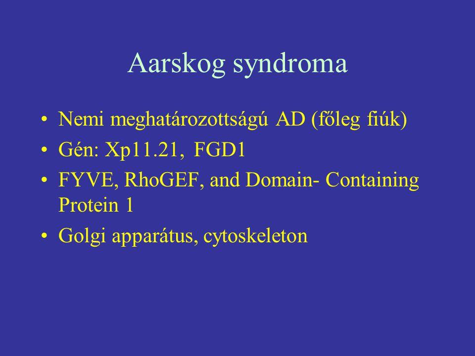 Aarskog syndroma Nemi meghatározottságú AD (főleg fiúk) Gén: Xp11.21, FGD1 FYVE, RhoGEF, and Domain- Containing Protein 1 Golgi apparátus, cytoskeleto