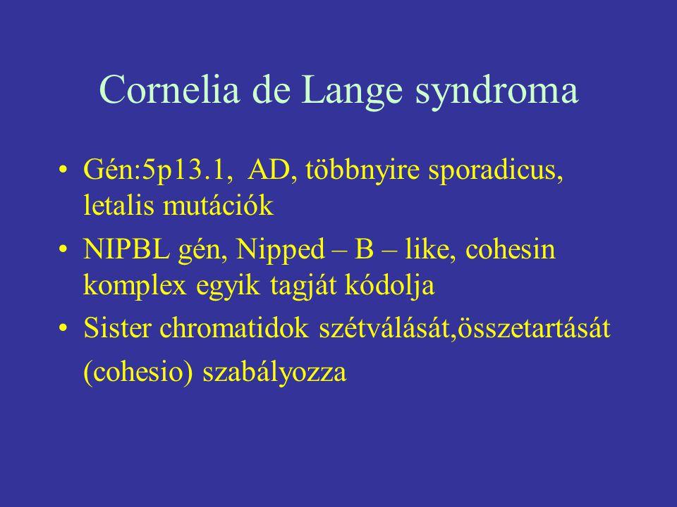 Cornelia de Lange syndroma Gén:5p13.1, AD, többnyire sporadicus, letalis mutációk NIPBL gén, Nipped – B – like, cohesin komplex egyik tagját kódolja S