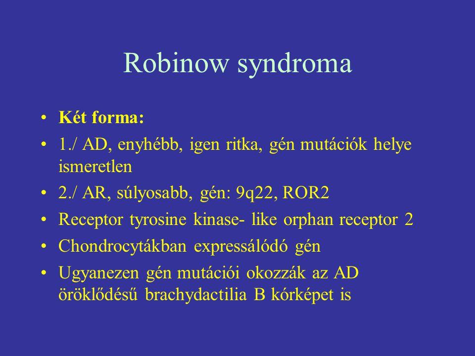 Robinow syndroma Két forma: 1./ AD, enyhébb, igen ritka, gén mutációk helye ismeretlen 2./ AR, súlyosabb, gén: 9q22, ROR2 Receptor tyrosine kinase- li