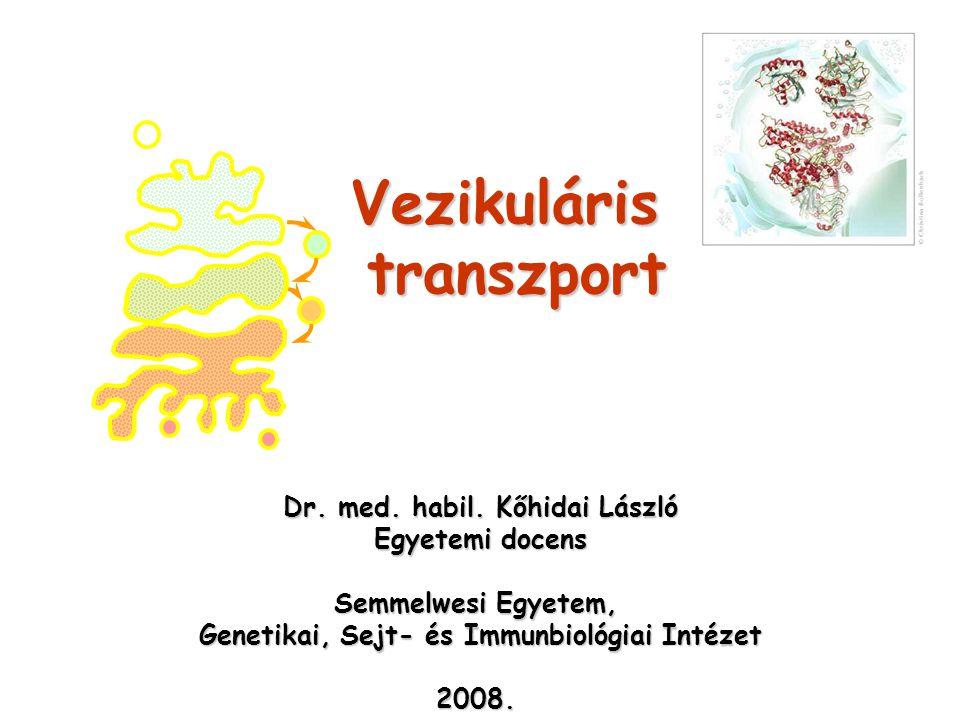 Intracelluláris vezikuláris transzport Kommunikáció – sejten belül; sejt-környezet Kommunikáció – sejten belül; sejt-környezet  Belső membránrendszer  Anyagok felvétele és emésztés helyére (lizoszómák) szállítása - endocitózis  Proteinek szállítása az ER-Golgi útvonalon a felszíni membránhoz - exocitózis
