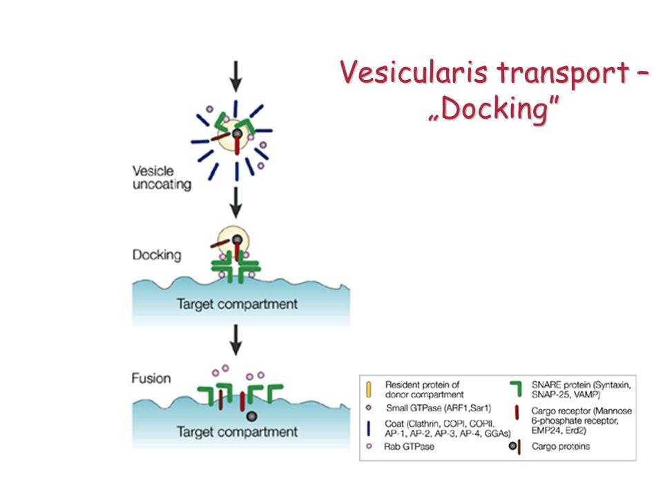 """""""Docking"""""""