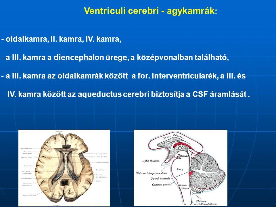 Ventriculi cerebri - agykamrák : - oldalkamra, II. kamra, IV. kamra, - a III. kamra a diencephalon ürege, a középvonalban található, - a III. kamra az