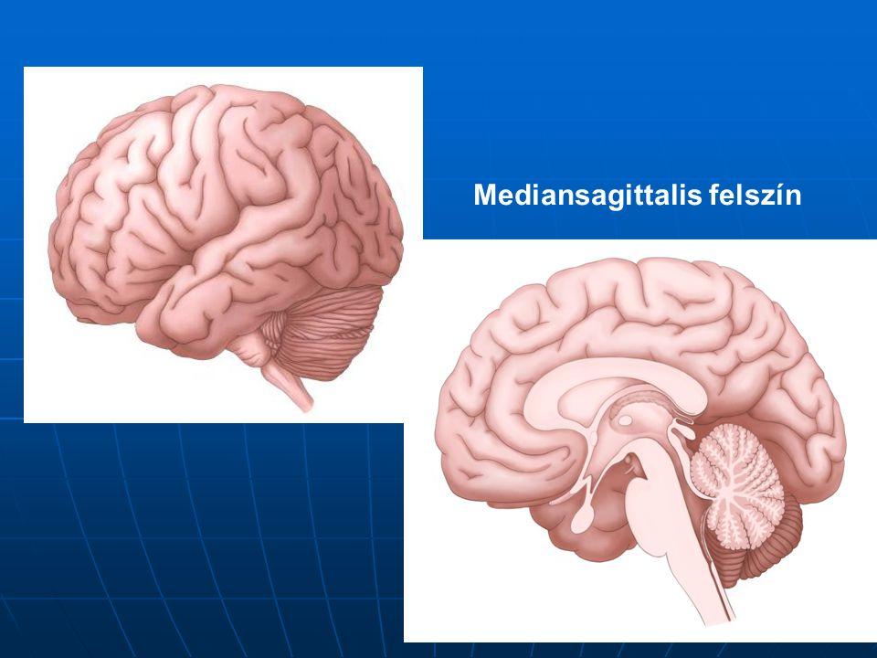 Mediansagittalis felszín