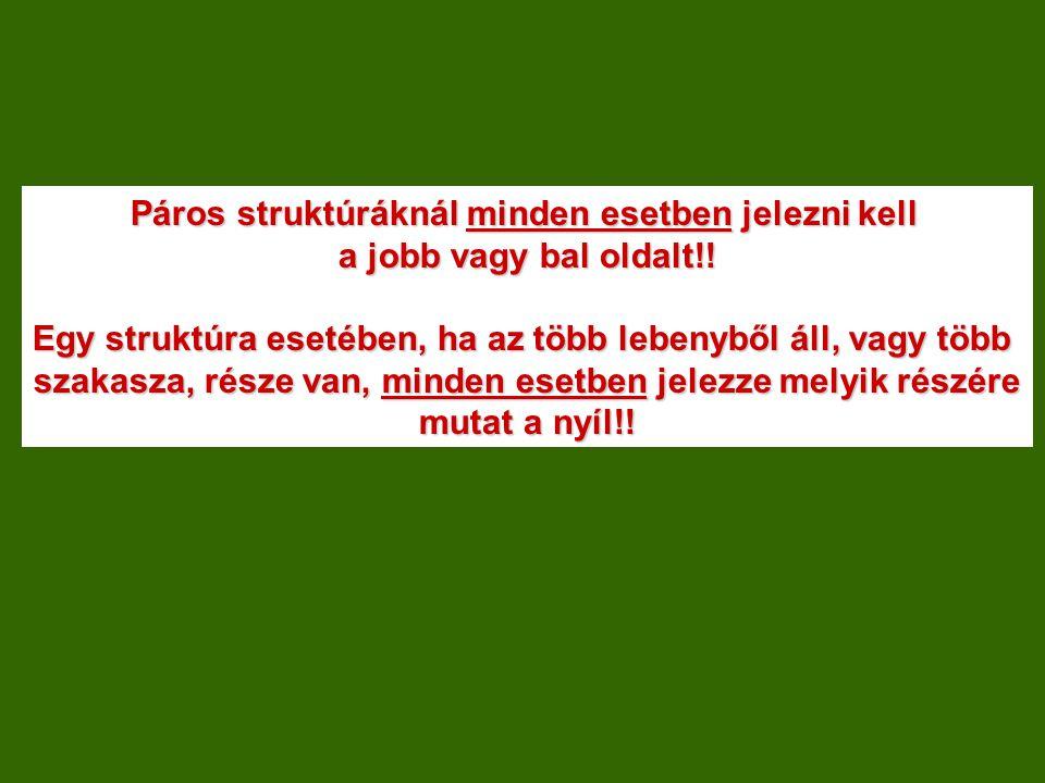 Orvosi Képalkotó Eljárások Anatómiai Modul részvizsga II.