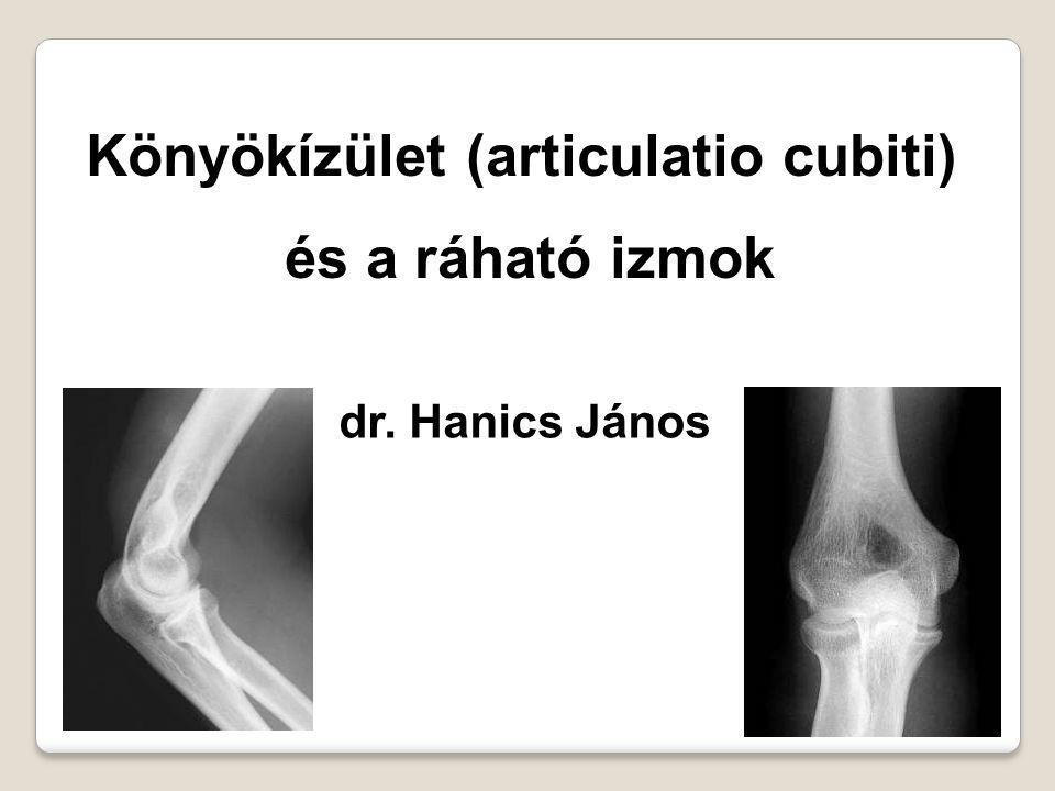 Könyökízület (articulatio cubiti) és a ráható izmok dr. Hanics János