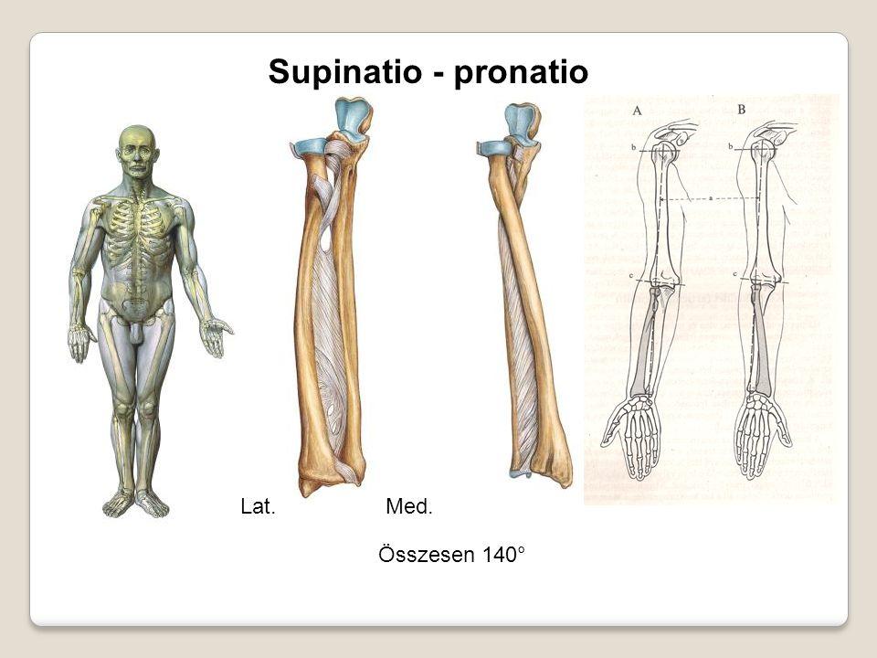 Supinatio - pronatio Összesen 140° Lat.Med.