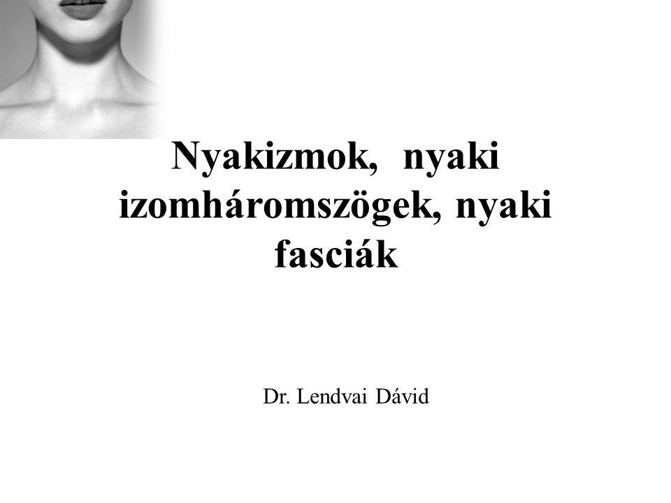 Nyakizmok, nyaki izomháromszögek, nyaki fasciák Dr. Lendvai Dávid