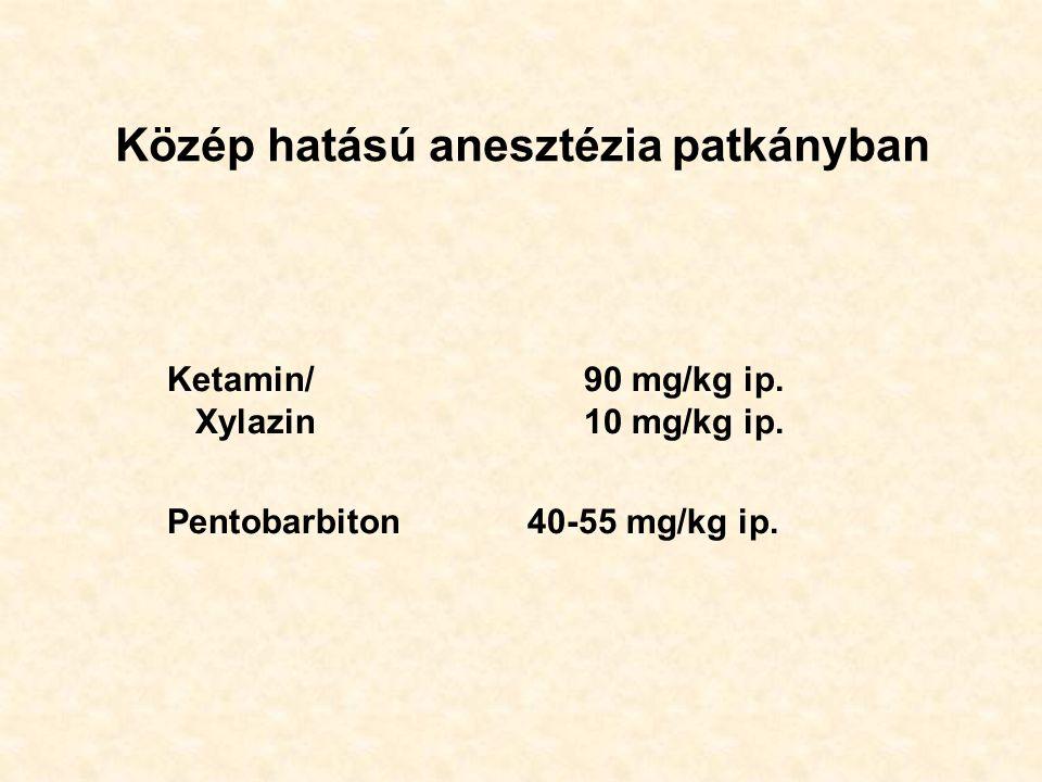 Közép hatású anesztézia patkányban Ketamin/90 mg/kg ip. Xylazin10 mg/kg ip. Pentobarbiton 40-55 mg/kg ip.