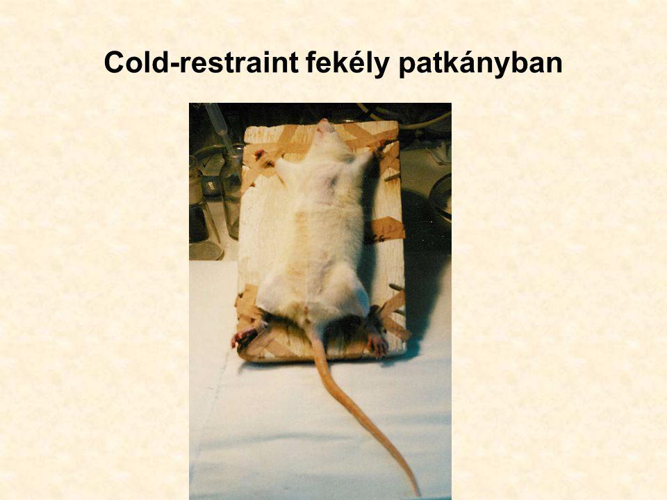 Cold-restraint fekély patkányban