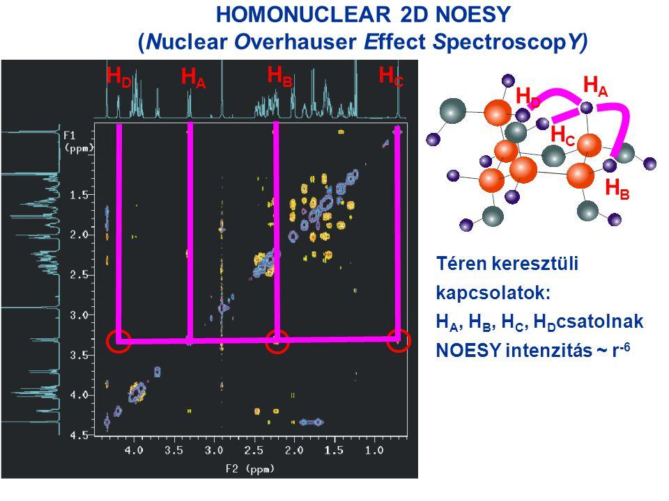 HOMONUCLEAR 2D NOESY (Nuclear Overhauser Effect SpectroscopY) HAHA HBHB HCHC HDHD HAHA HBHB HCHC HDHD Téren keresztüli kapcsolatok: H A, H B, H C, H D csatolnak NOESY intenzitás ~ r -6