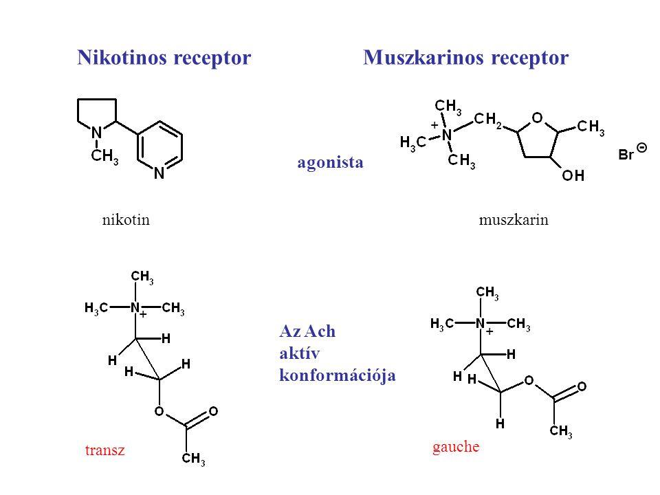 Nikotinos receptor Muszkarinos receptor agonista Az Ach aktív konformációja Br - nikotinmuszkarin transz gauche + + +