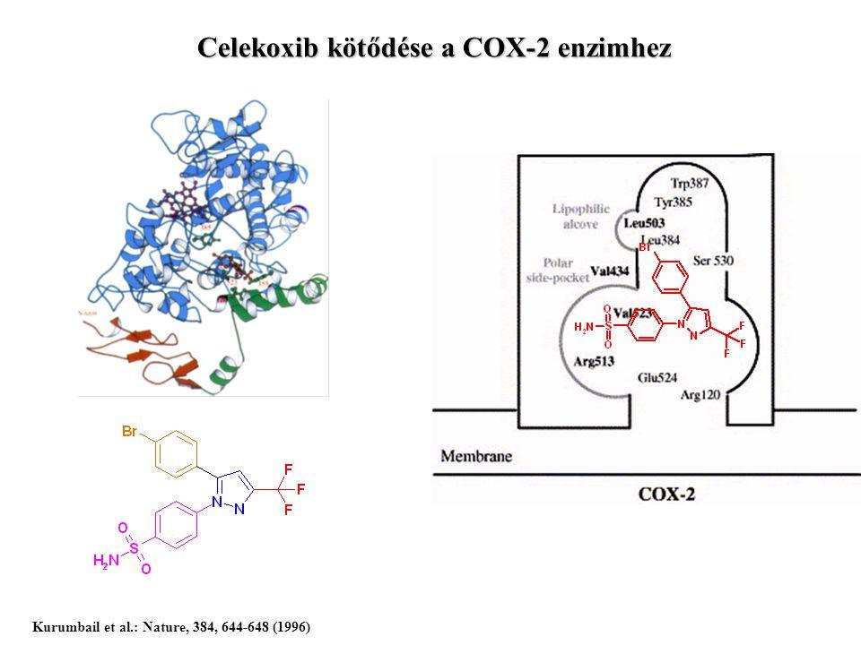 Celekoxib kötődése a COX-2 enzimhez Kurumbail et al.: Nature, 384, 644-648 (1996)