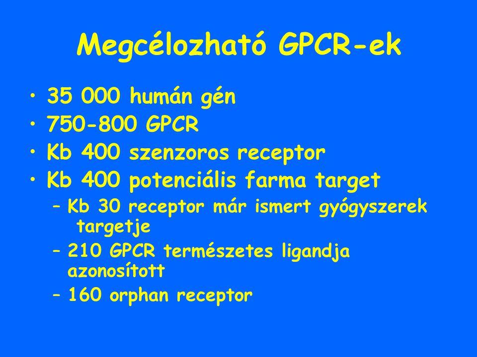 Megcélozható GPCR-ek 35 000 humán gén 750-800 GPCR Kb 400 szenzoros receptor Kb 400 potenciális farma target –Kb 30 receptor már ismert gyógyszerek ta