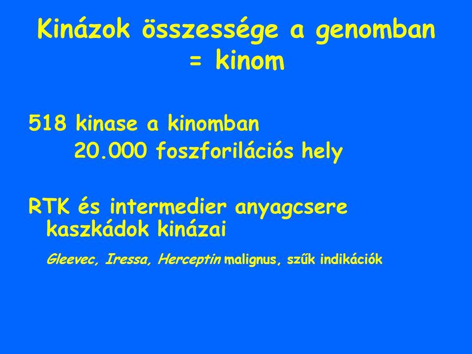 Kinázok összessége a genomban = kinom 518 kinase a kinomban 20.000 foszforilációs hely RTK és intermedier anyagcsere kaszkádok kinázai Gleevec, Iressa