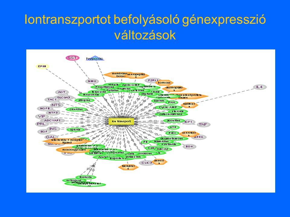 Iontranszportot befolyásoló génexpresszió változások