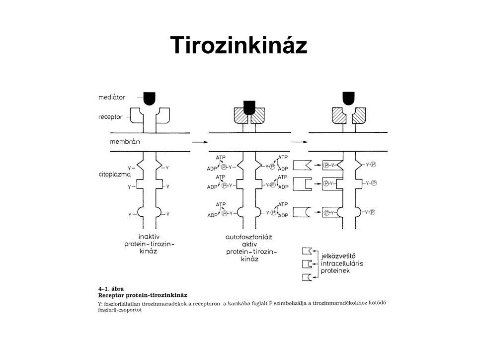 Tirozinkináz