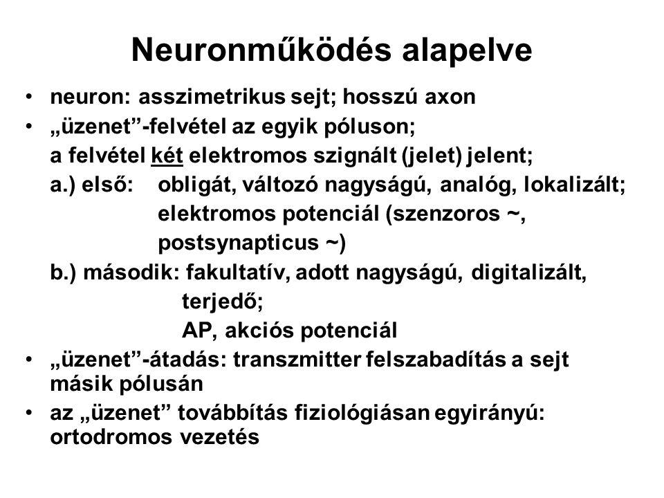"""Neuronműködés alapelve neuron: asszimetrikus sejt; hosszú axon """"üzenet""""-felvétel az egyik póluson; a felvétel két elektromos szignált (jelet) jelent;"""