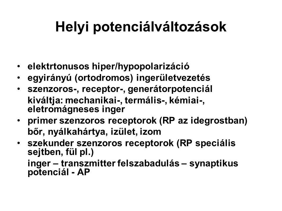 Helyi potenciálváltozások elektrtonusos hiper/hypopolarizáció egyirányú (ortodromos) ingerületvezetés szenzoros-, receptor-, generátorpotenciál kivált