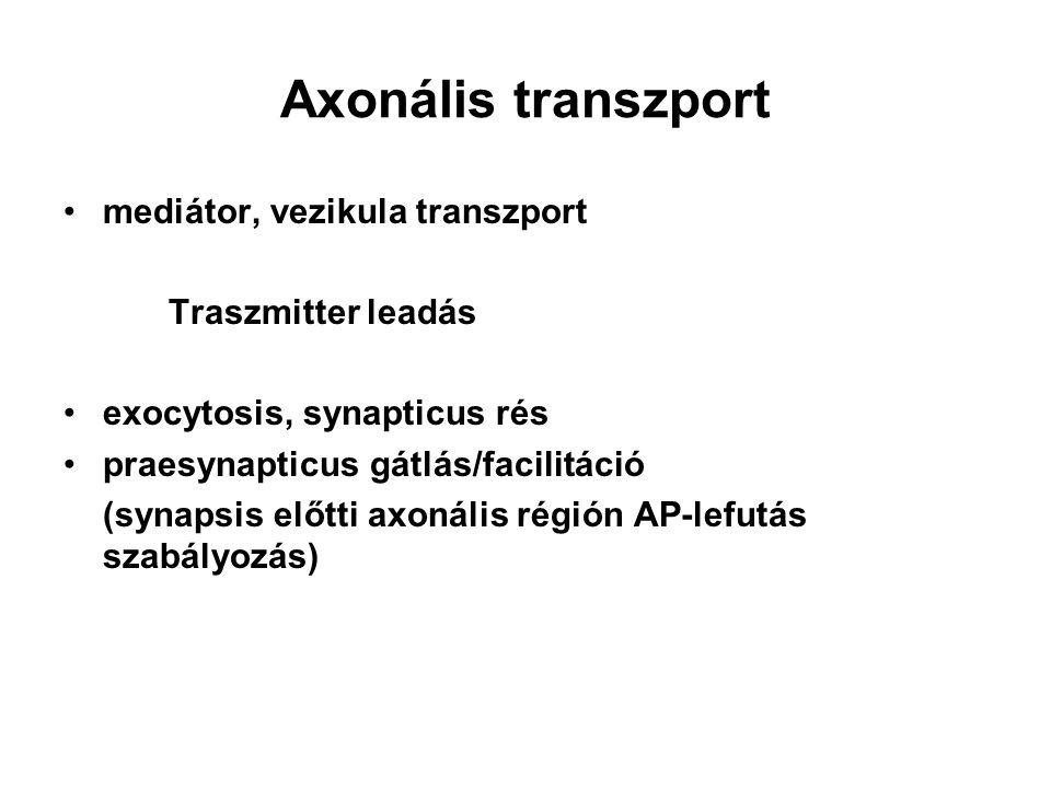 Axonális transzport mediátor, vezikula transzport Traszmitter leadás exocytosis, synapticus rés praesynapticus gátlás/facilitáció (synapsis előtti axo