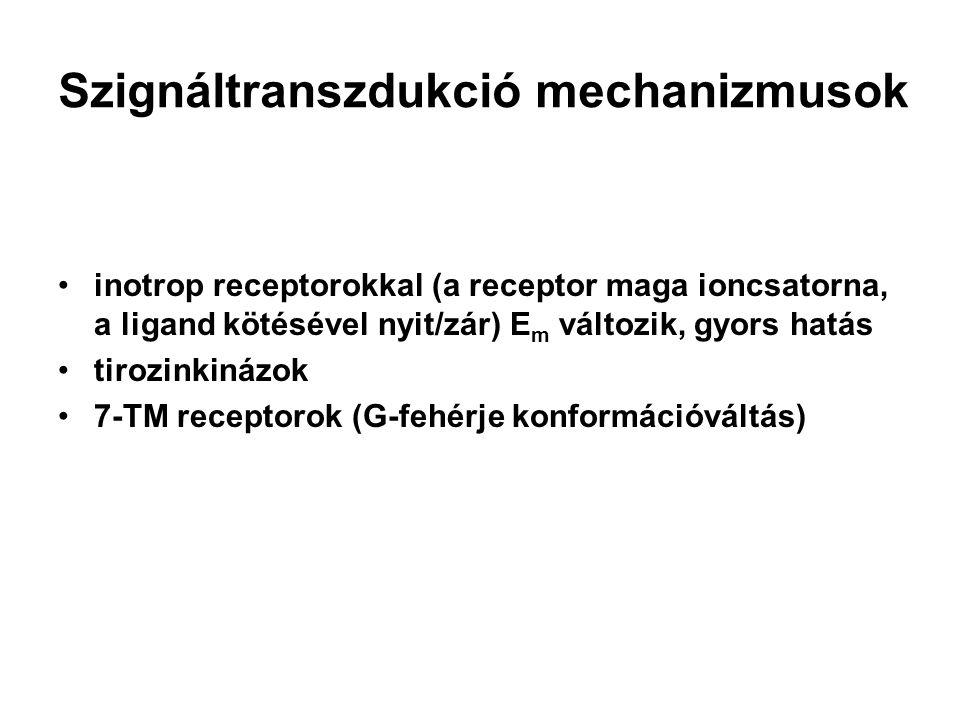 Kation csatornák nikotinos ACh, serotonin, glutamát receptorok Na +, K + nem szelektív, főleg Na + mozgást enged befele helyi depolarizáció; vázizom neuromuscularis synapsisa 5 alegység; izomorfia; vázizom típusú, kuraréval bénítható - izomrelaxans