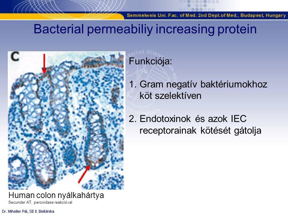 Bacterial permeabiliy increasing protein Human colon nyálkahártya Secunder AT, peroxidase reakcióval Funkciója: 1.Gram negatív baktériumokhoz köt szelektíven 2.Endotoxinok és azok IEC receptorainak kötését gátolja