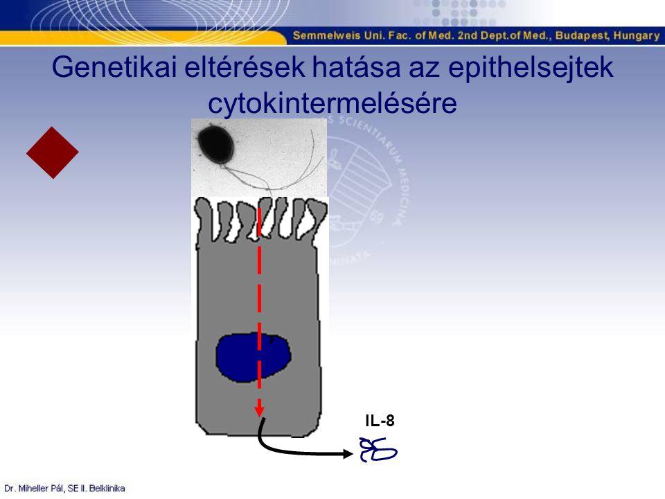 IL-8 Genetikai eltérések hatása az epithelsejtek cytokintermelésére
