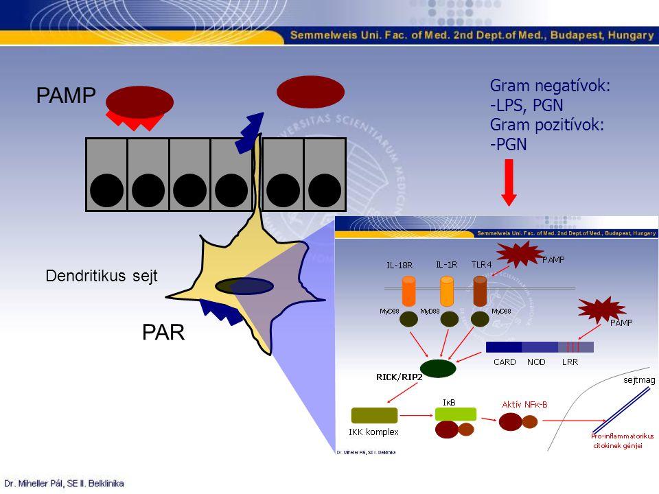 Gram negatívok: -LPS, PGN Gram pozitívok: -PGN PAMP PAR Dendritikus sejt