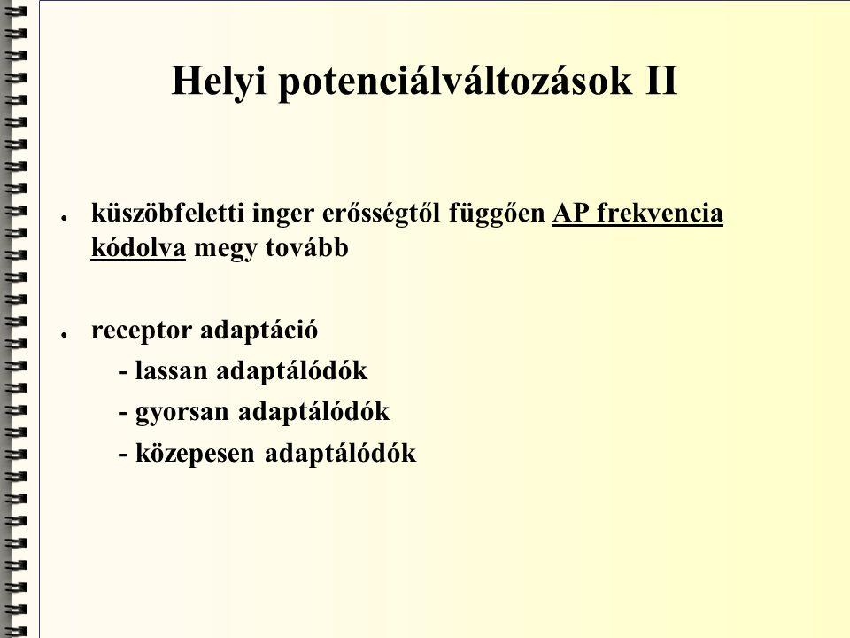 Synaptikus kapcsolat (Sherrington) ● elektrotonusos postsynaptikus potenciál (EPSP) - gutamát (ingerlő; 50 %; inotropreceptor, kation) - acetilcholin (vegetatív idegrendszer) ● időbeli és térbeli summáció (egy helyen sok mediátor, egymás mellet több helyen) ● inhibítoros PSP (GABA) receptorok (anion, klorid) ● az ESPP-k és az IPSP-k összeadódnak