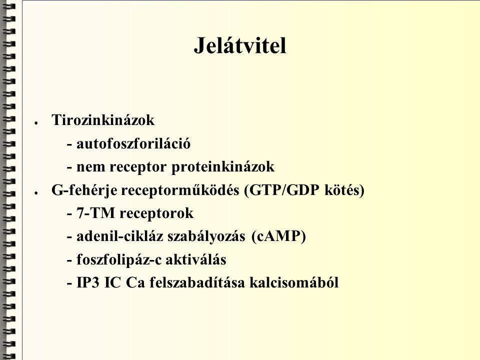 """Neuronműködés alapelve ● neuron: asszimetrikus sejt; hosszú axon ● """"üzenet -felvétel az egyik póluson; a felvétel két elektromos szignált (jelet) jelent; a.) első:obligát, változó nagyságú, analóg, lokalizált; elektromos potenciál (szenzoros ~, postsynapticus ~) b.) második: fakultatív, adott nagyságú, digitalizált, terjedő; AP, akciós potenciál ● """"üzenet -átadás: transzmitter felszabadítás a sejt másik pólusán ● az """"üzenet továbbítás fiziológiásan egyirányú: ortodromos vezetés"""