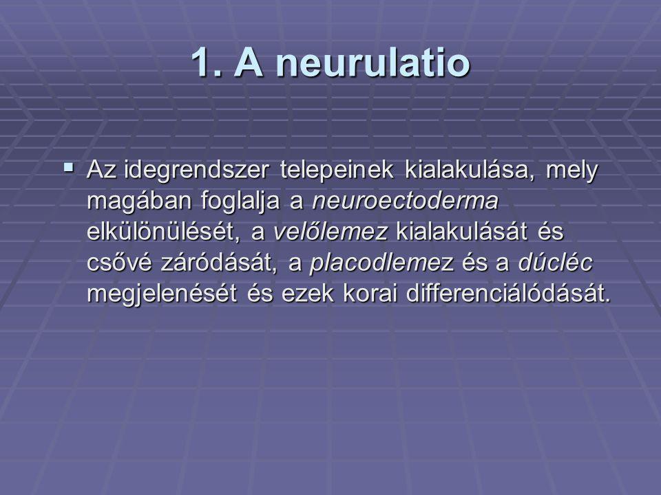 1. A neurulatio  Az idegrendszer telepeinek kialakulása, mely magában foglalja a neuroectoderma elkülönülését, a velőlemez kialakulását és csővé záró