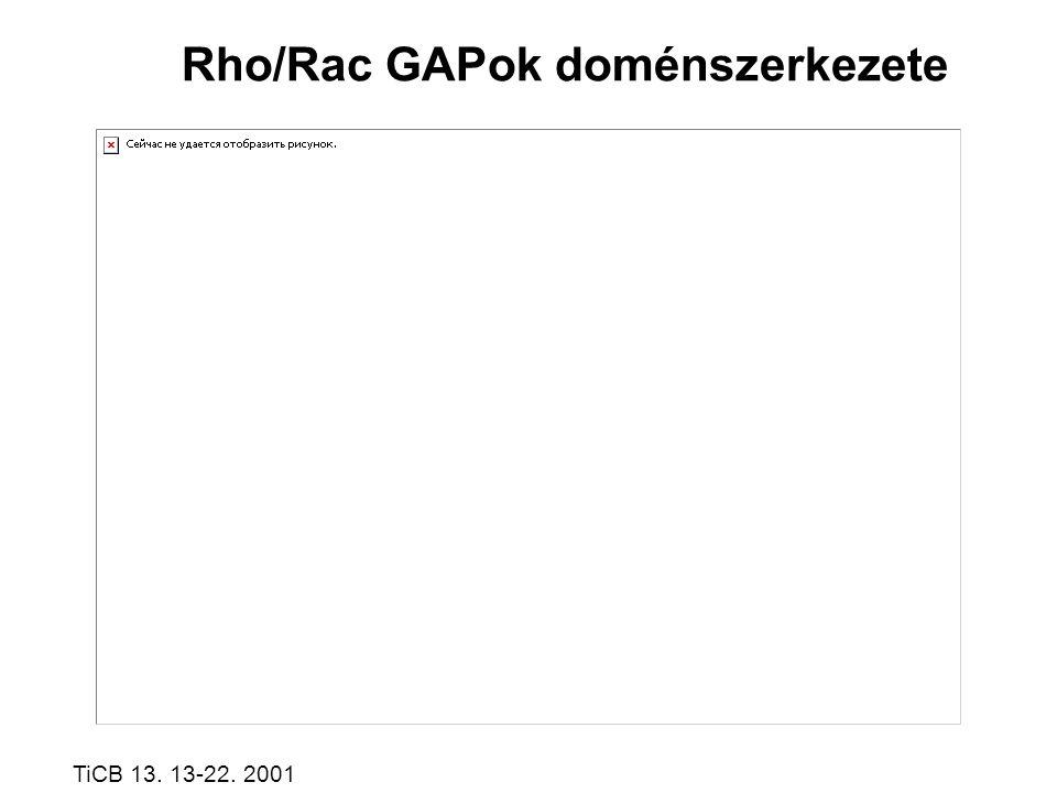 Rho/Rac GAPok doménszerkezete TiCB 13. 13-22. 2001
