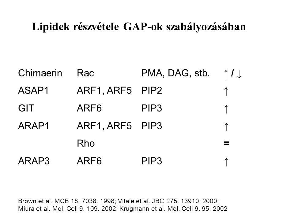Lipidek részvétele GAP-ok szabályozásában ChimaerinRac PMA, DAG, stb.