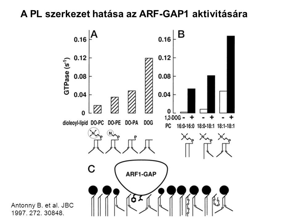 Antonny B. et al. JBC 1997. 272. 30848. A PL szerkezet hatása az ARF-GAP1 aktivitására