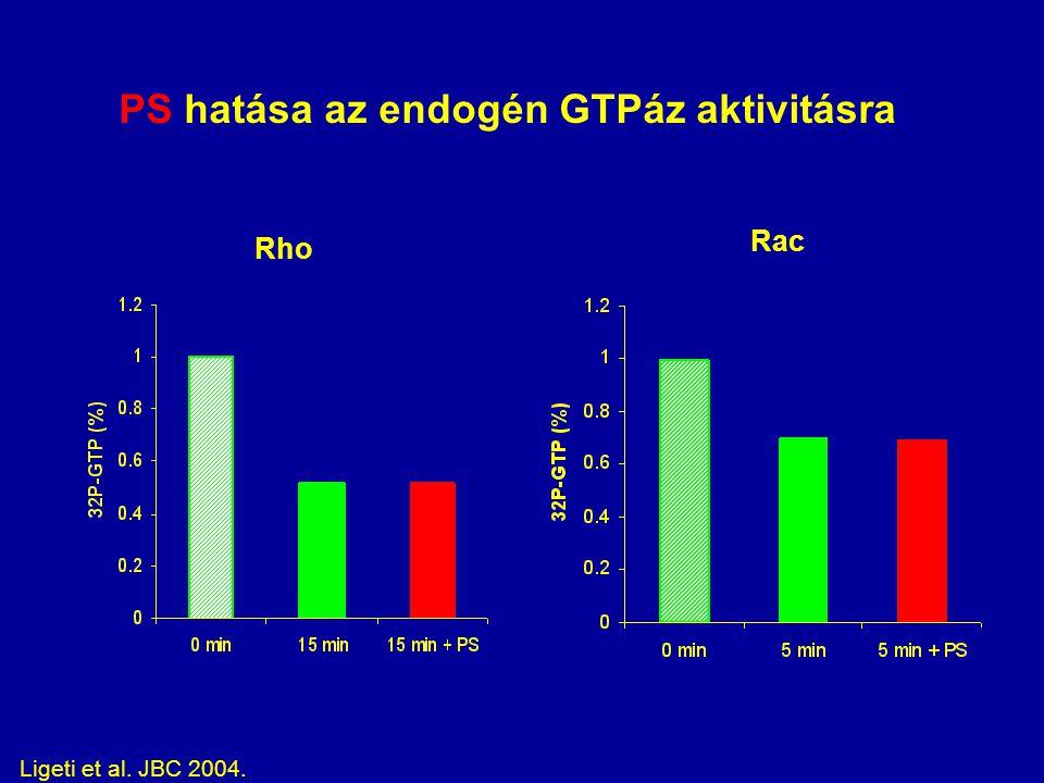 PS hatása az endogén GTPáz aktivitásra Rho Rac Ligeti et al. JBC 2004.