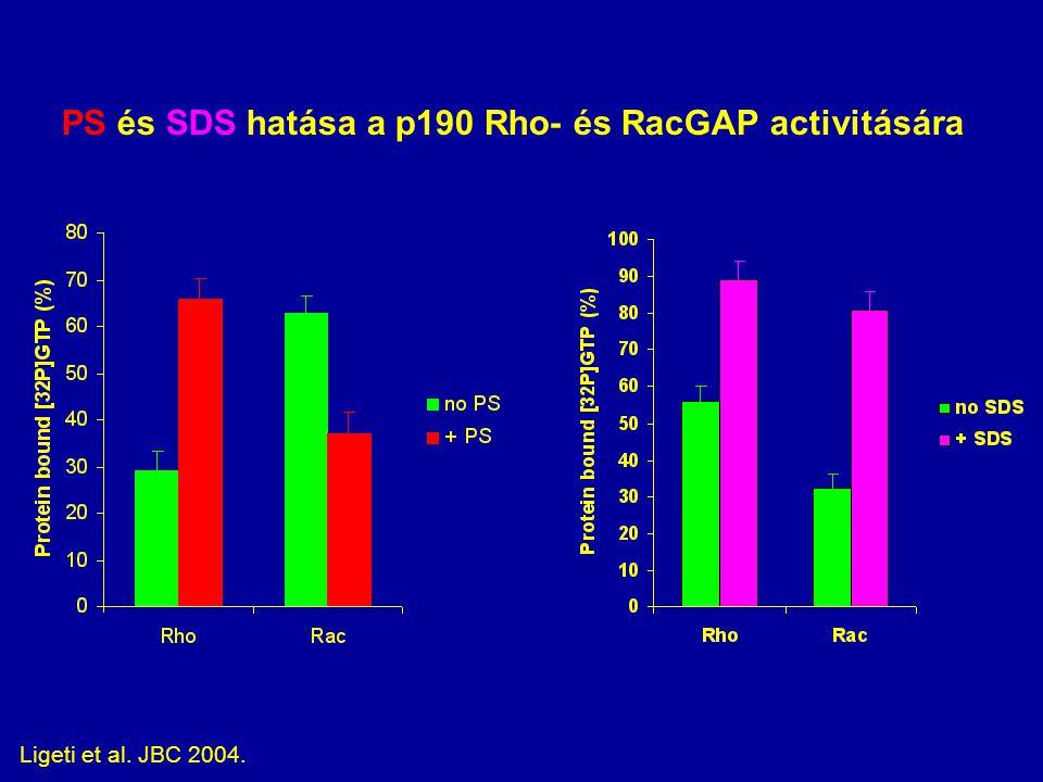 PS és SDS hatása a p190 Rho- és RacGAP activitására Ligeti et al. JBC 2004.