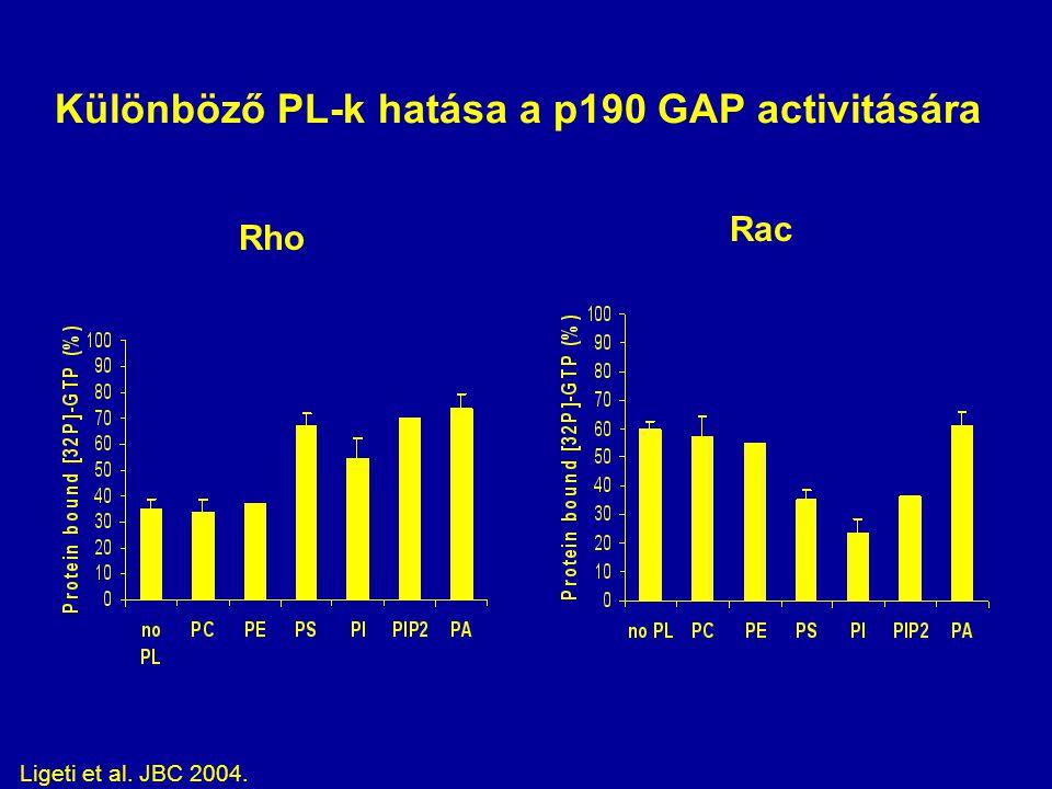 Különböző PL-k hatása a p190 GAP activitására Rho Rac Ligeti et al. JBC 2004.