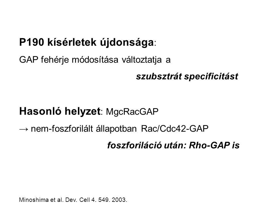 P190 kísérletek újdonsága : GAP fehérje módosítása változtatja a szubsztrát specificitást Hasonló helyzet : MgcRacGAP → nem-foszforilált állapotban Rac/Cdc42-GAP foszforiláció után: Rho-GAP is Minoshima et al.